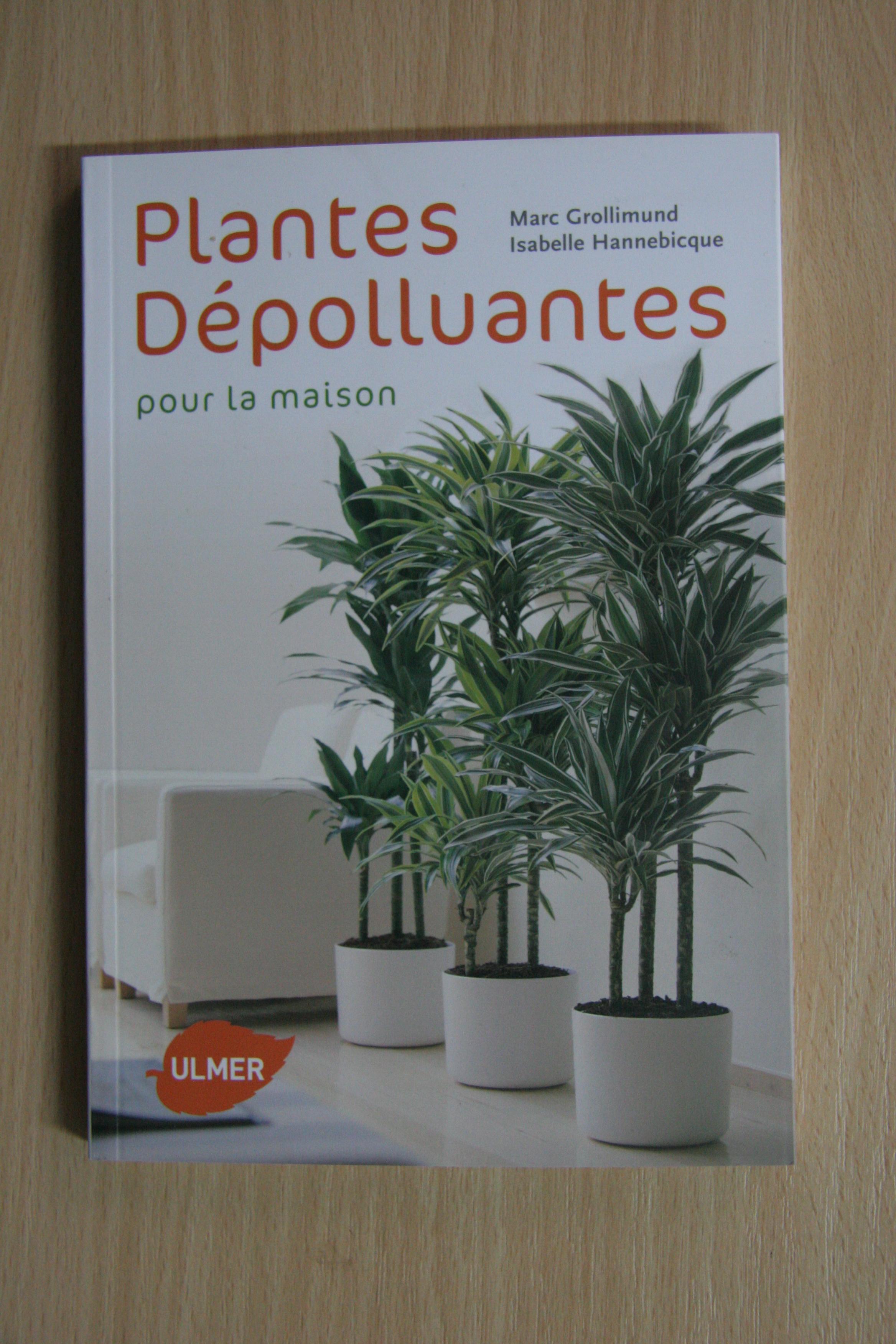 Plante verte interieur depolluante 28 images plante of Plantes depolluantes